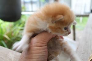 cat20140809_01