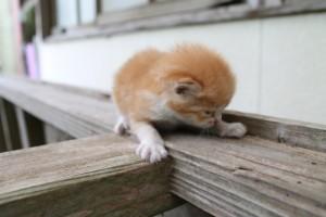 cat20140809_02