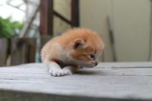 cat20140809_06