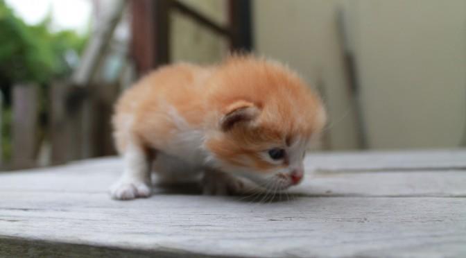 cat20140809_10