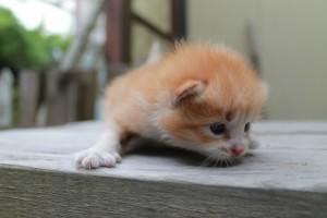cat20140809_11
